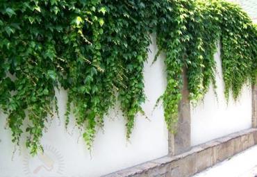 Как украсить забор на даче своими руками: фото