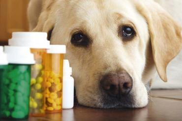 Ветеринарные антибиотики: есть ли разница? - Статьи - ilikePet