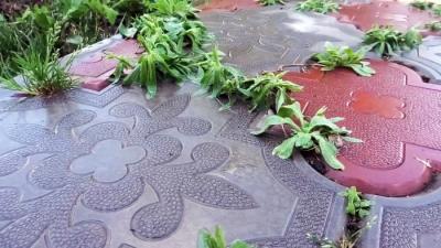Почти бесплатный способ избавиться от сорняков в швах тротуарной плитки без химии