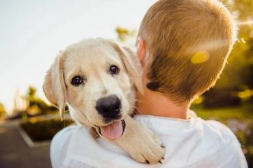 Не только охранник или поводырь: какие профессии может освоить собака