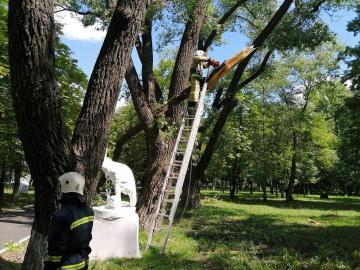 Сотрудники мэрии Курска и студенты ликвидируют последствия урагана
