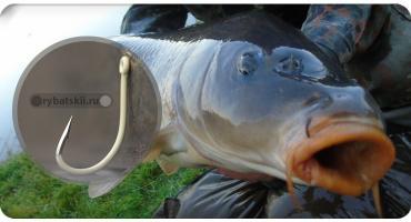 Как ловить карпа осенью и в чём особенности осенней карповой рыбалки