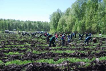 Курский губернатор призвал вместе восстанавливать леса