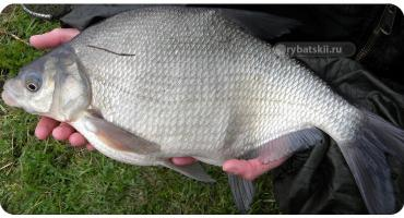 Лучшие места для рыбалки в Карелии и как подготовиться к поездке