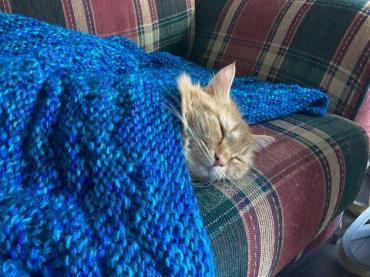 Всюду жизнь: фотки домашних питомцев, встречающих холодную осень - Статьи - ilikePet
