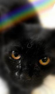 Печальная история: черного котика пропустили сквозь мусорный конвейер - Статьи - ilikePet